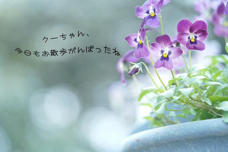 DSC03688.jpg