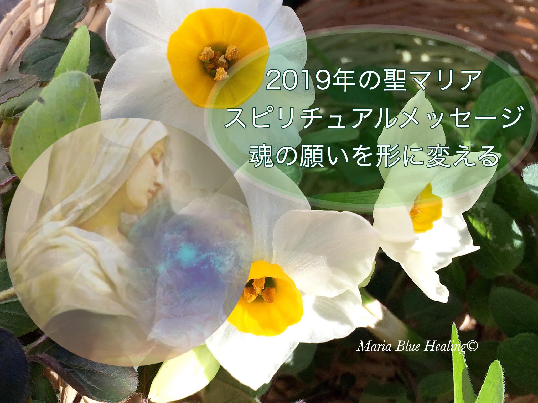 2019年の聖マリアメッセージ 画像水仙