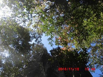 木の色づき20181110