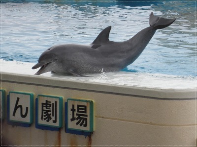 okinawa19.jpg