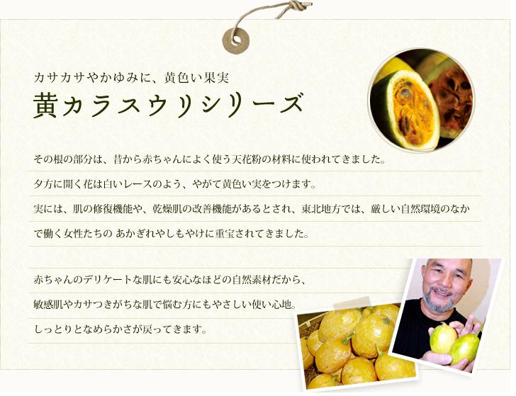 黄カラスウリシリーズ