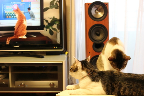 平井さんと猫