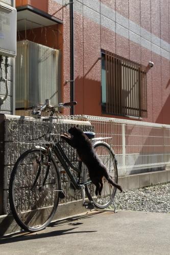 自転車にぴょん