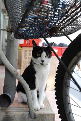 自転車の向こう
