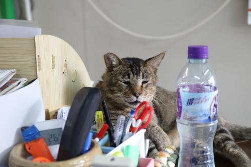 電器屋さんの猫2