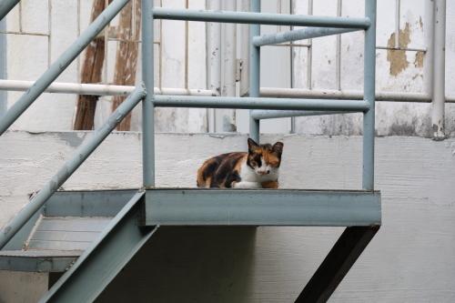 水色の階段