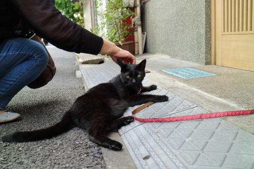 看板黒猫1