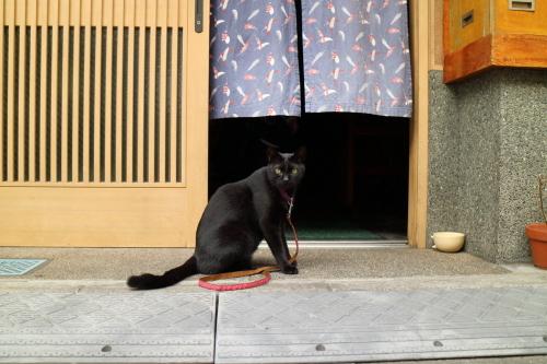 看板黒猫2