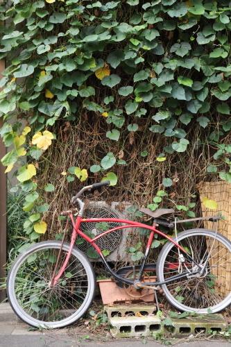 ツタと自転車