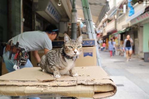 電気屋猫2