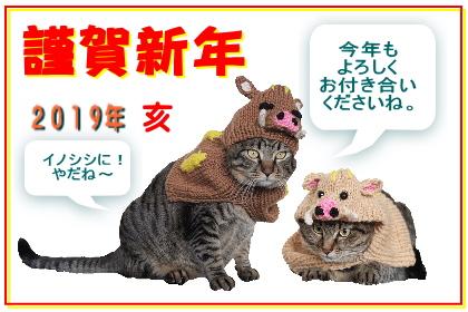 猫 いのしし 亥 変身 ニット