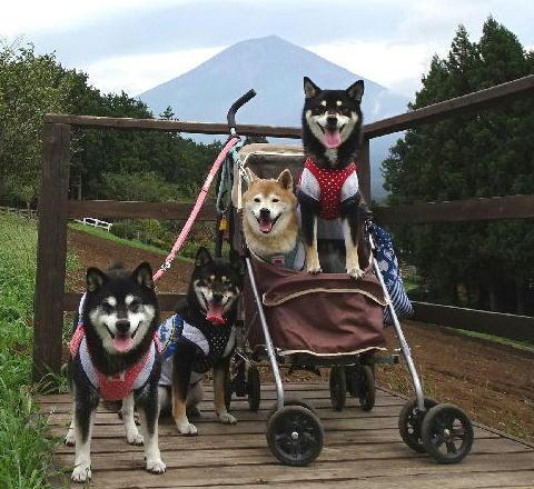 富士山女子会