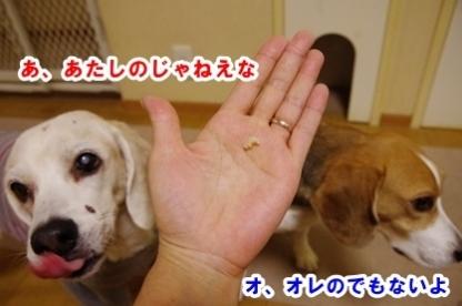 爪切り 4