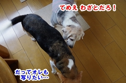 しっぽ 5