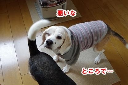 しっぽ 4