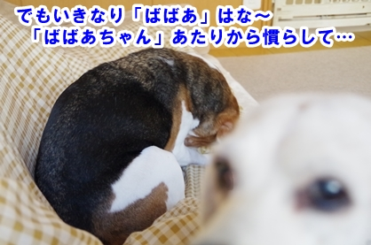 ばばあ 6