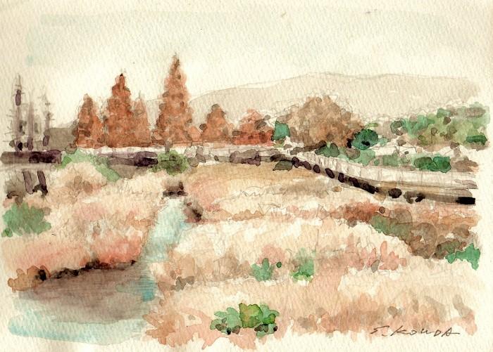 公園沿いの川 (700x501)
