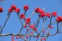 荻野の赤い実