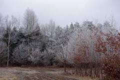 12月10日_霧氷-1