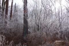 1月12日-ジョギング風景-1