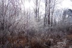 1月12日-ジョギング風景-2