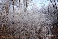 1月12日-ジョギング風景-3
