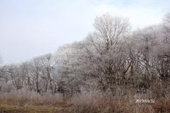 1月12日-ジョギング風景-5