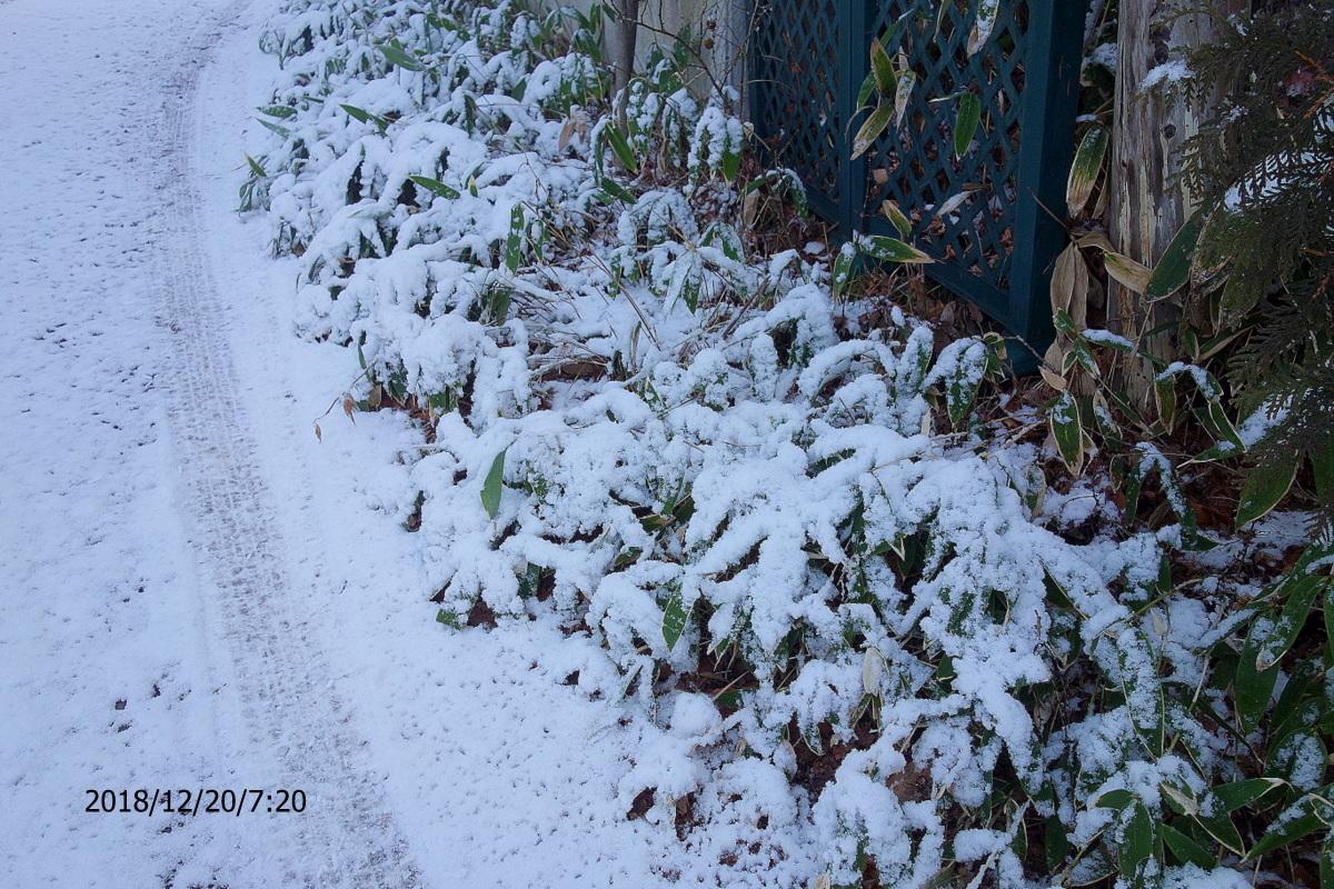 Snow_181220-2.jpg