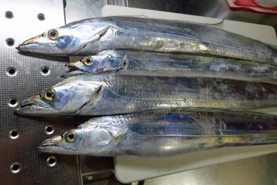 18_10_17太刀魚2