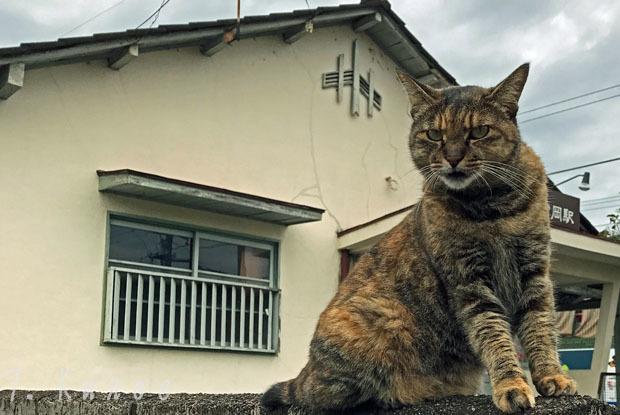 3007猫町フェス08