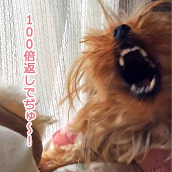 IMG_3289b.jpg