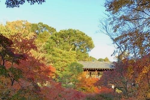 301124 東福寺15