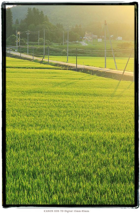 1808yamagata01.jpg