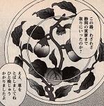 わざわざ一晩かけて静岡の実家へ行き、亀さんお気に入りのカレー皿を取りに!