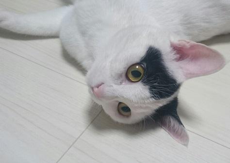 メス猫一歳