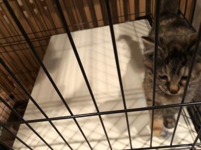 さび仔猫2