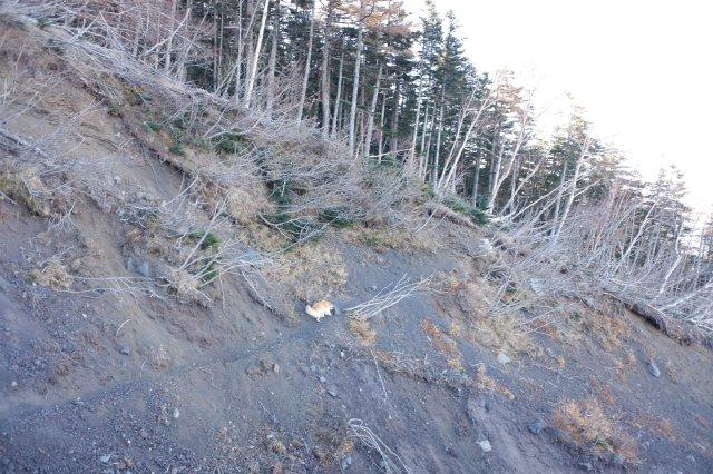 富士山御中道 2018.11.2~3 143