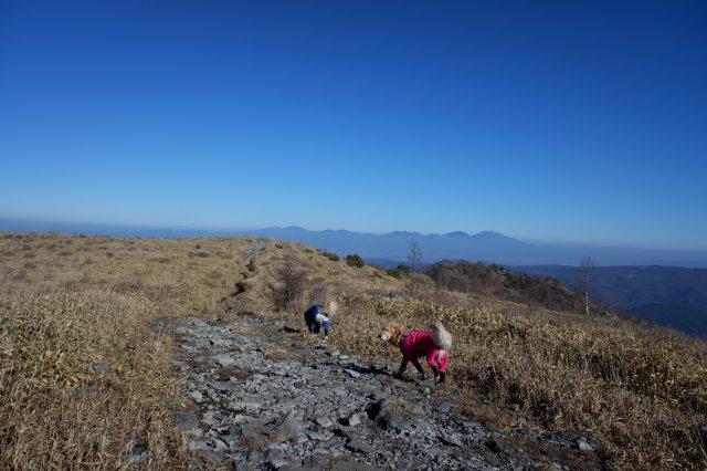 2018.12.2皆で霧ヶ峰高原ハイキング 050