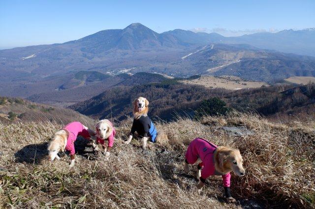 2018.12.2皆で霧ヶ峰高原ハイキング 206