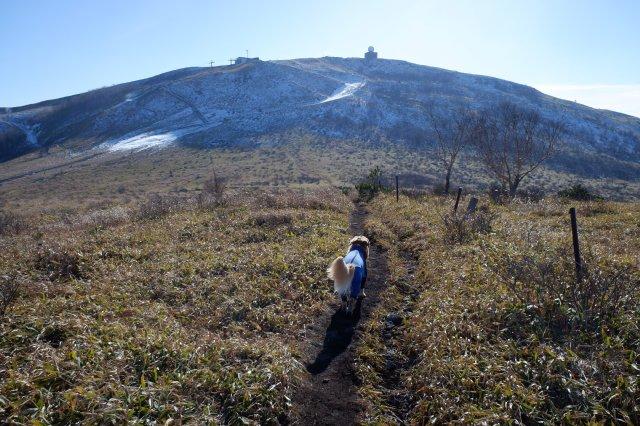 2018.12.2皆で霧ヶ峰高原ハイキング 210