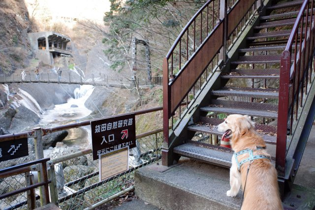 袋田の滝2019.1.2 031