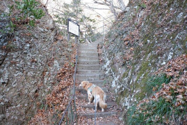 袋田の滝2019.1.2 039