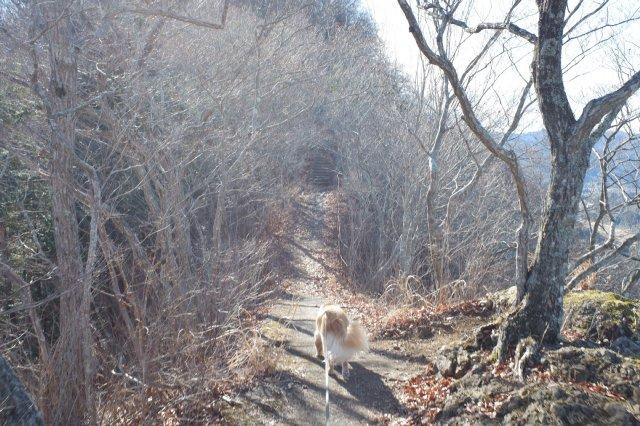 袋田の滝2019.1.2 065