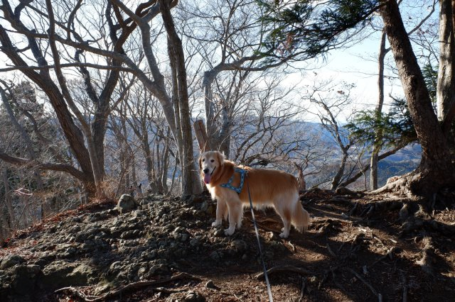 袋田の滝2019.1.2 074