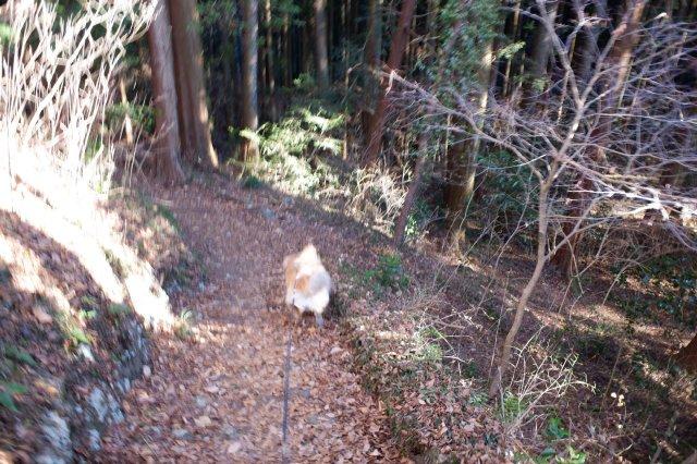 袋田の滝2019.1.2 086