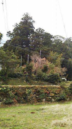 kumano500DSC_0511.jpg