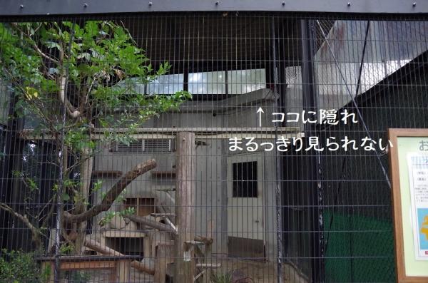 ツシマヤマネコ獣舎 全景 福岡市動物園