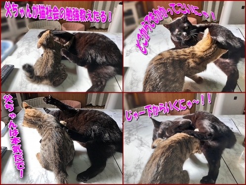猫社会の勉強