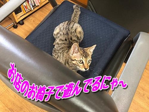 お店のお椅子で~