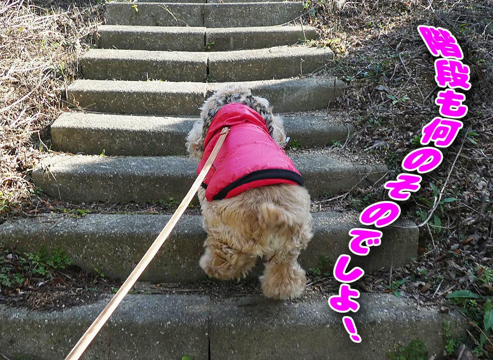 階段もなんのその